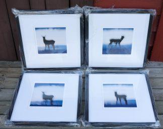 Exhibition prints